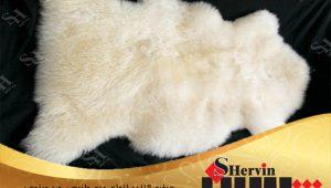 پوست گوسفند مرینوس